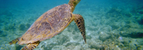 Fotograf: Bendt Mollerup, Sted: Maldiverne, Bandos Resort