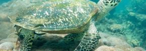 Fotograf: Søren Bergh Jensen, Sted: Hawksbills Turtle